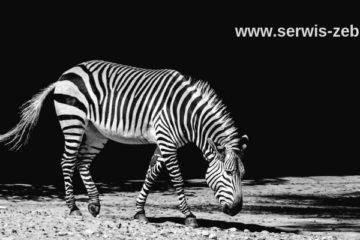 Gdzie naprawić drukarki Zebra wycofane z produkcji?